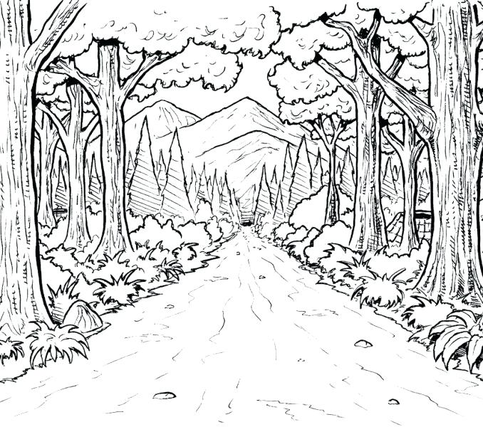 678x600 Preschool Forest Coloring Page Rainforest Coloring Pages