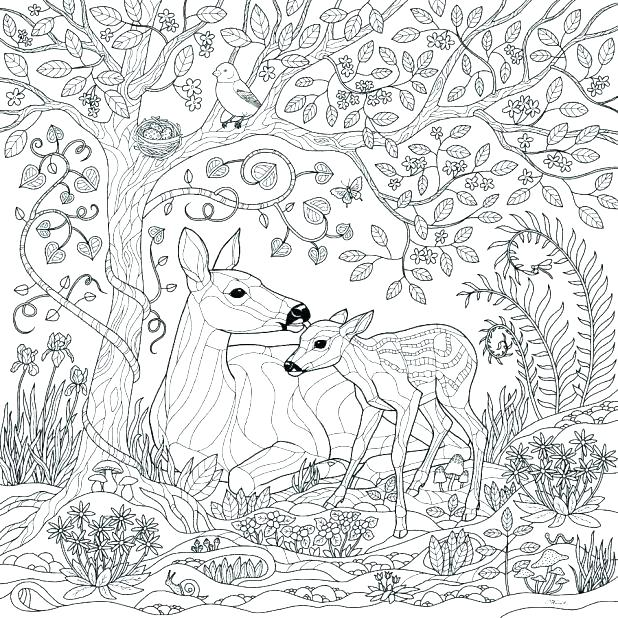 618x618 Amazon Animals Colouring Pages Cute Tiger Coloring Page Animals