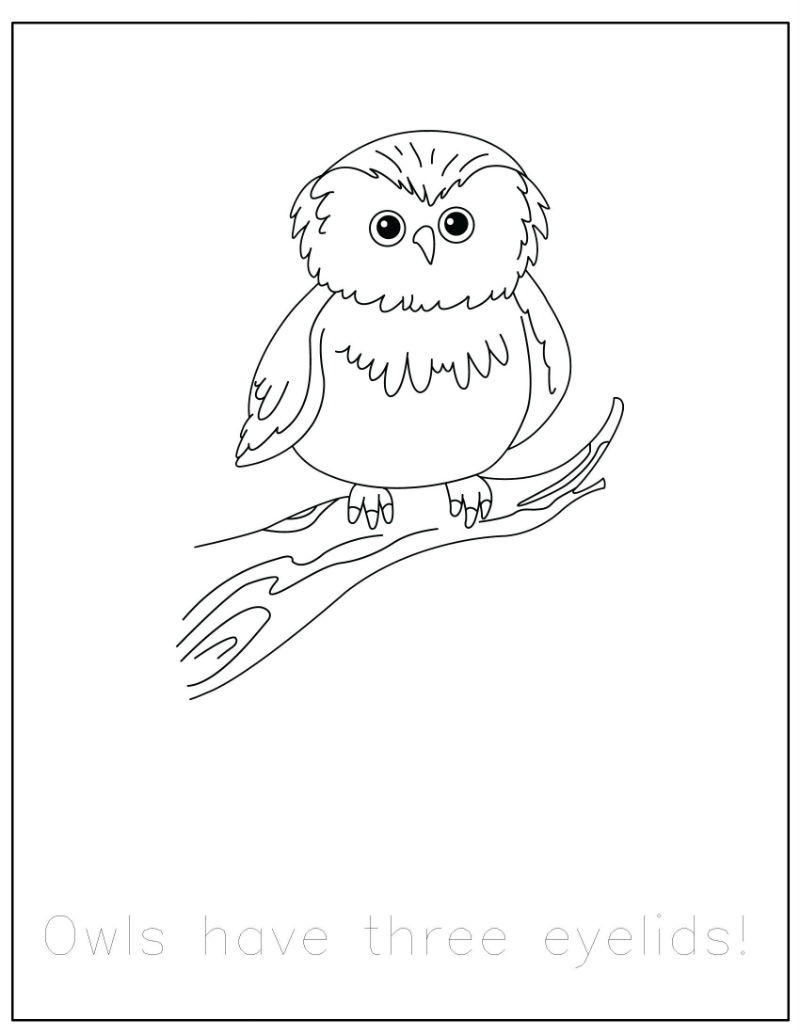 800x1035 Breakthrough Forest Animal Coloring Pages Printable Animals