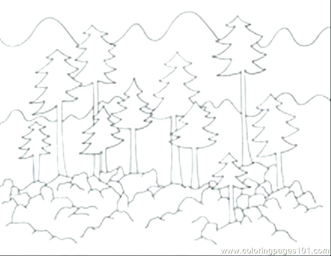 650x502 Forest Coloring Pages Forest Coloring Page Perfect Forest Coloring