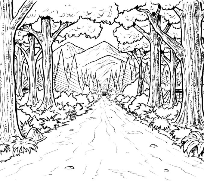 678x600 Forest Coloring Sheets Coloring Page