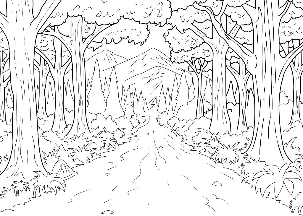 1024x731 Forest Colouring Pages Coloring Pages Forest A Coloring Page