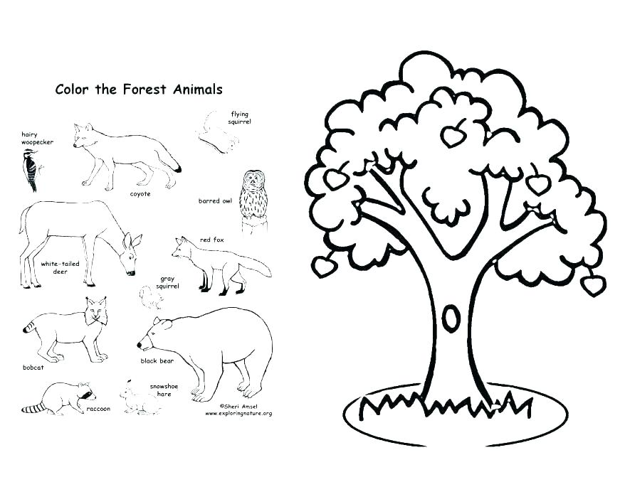 878x678 Apple Tree Coloring Page Apple Tree Coloring Page Forest Coloring