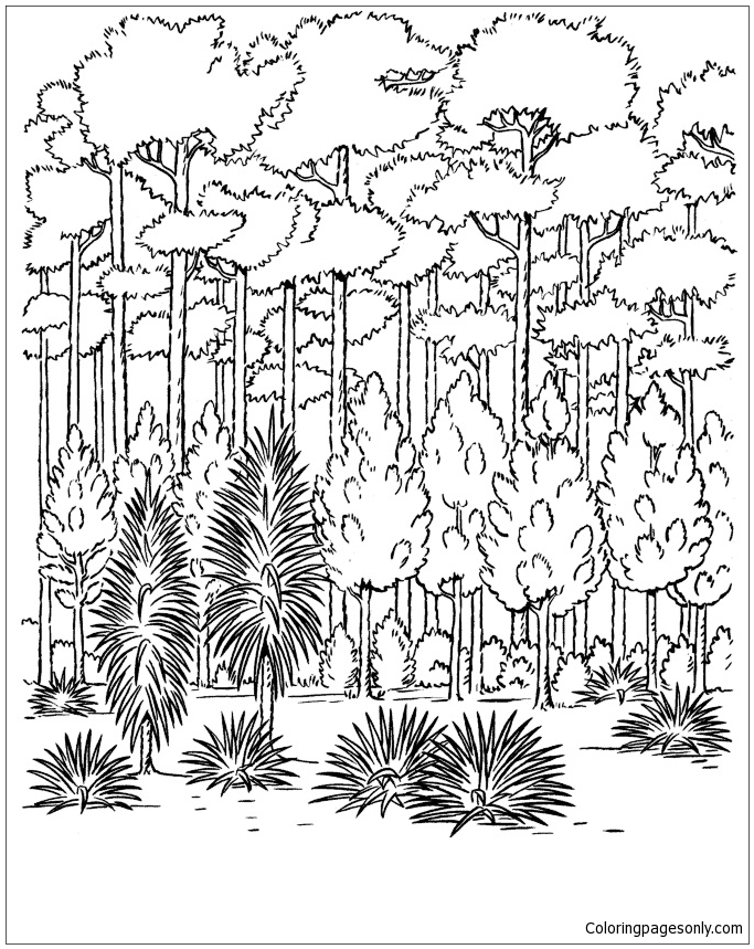 683x859 Forest Trees Coloring Page