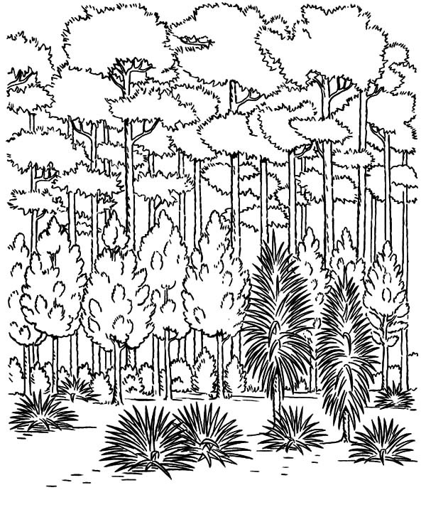 600x734 Keep Our Forest Green On Arbor Day Coloring Pages Best Place