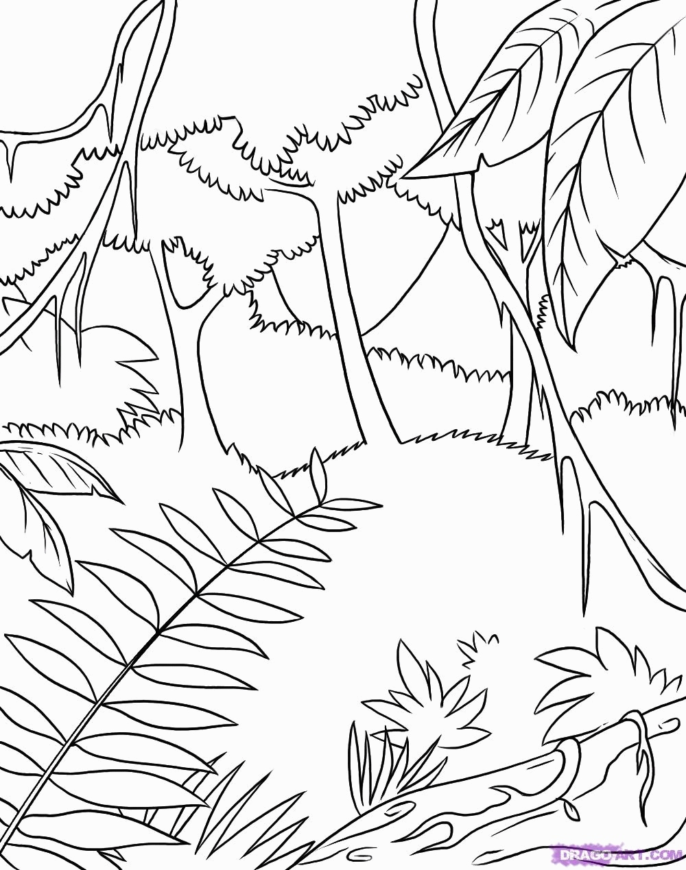 1000x1269 Rainforest Coloring Pages Inspirational Rain Forest Trees Coloring