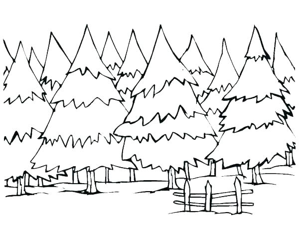 600x493 Forest Coloring Pages