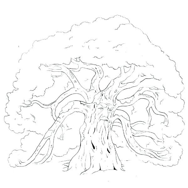 600x600 Coloring Pages Of Trees Without Leaves Tree Without Leaves Of Bare