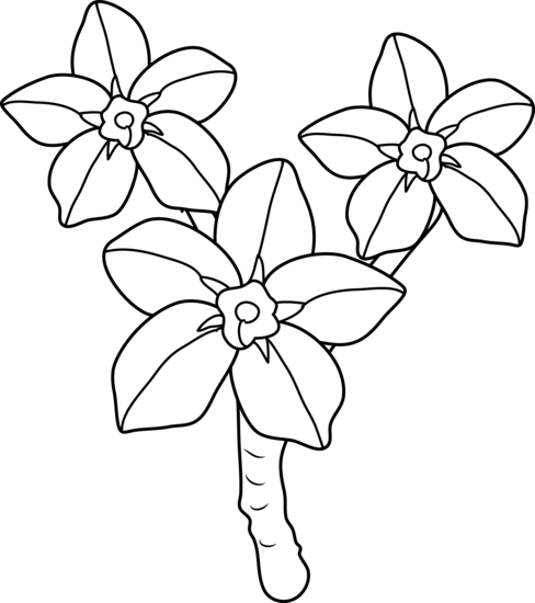 488x550 Forget Me Nots Coloring Page