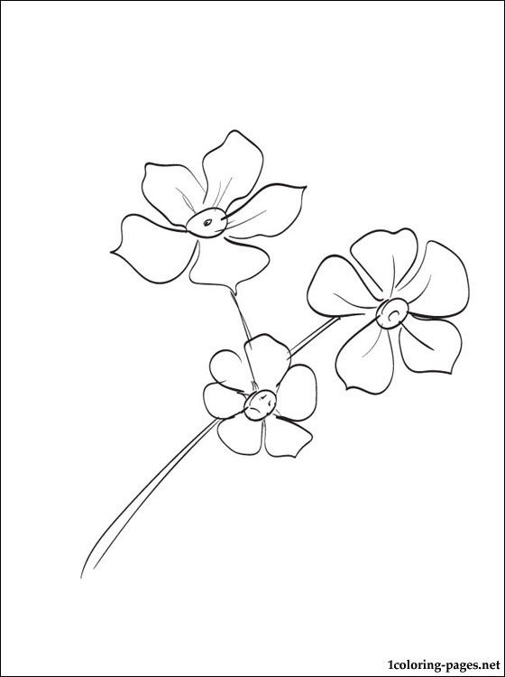 560x750 Forget Me Nots Coloring Page Coloring Pages Pattern And How