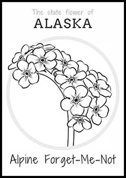 248x348 Free Alaska State Flower Coloring Page Alpine Forget Me Not