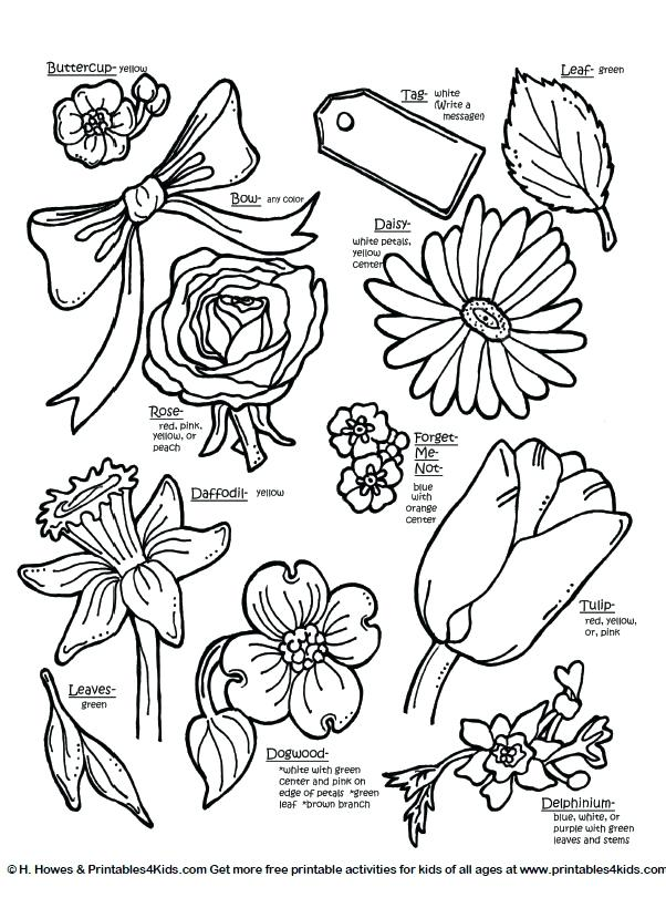 Forget Me Not Coloring Page At Getdrawings Com Free For Personal