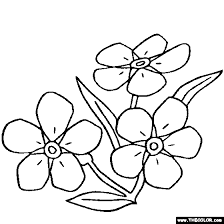 224x224 Image Result For Forget Me Nots Drawing Embroidery Patterns
