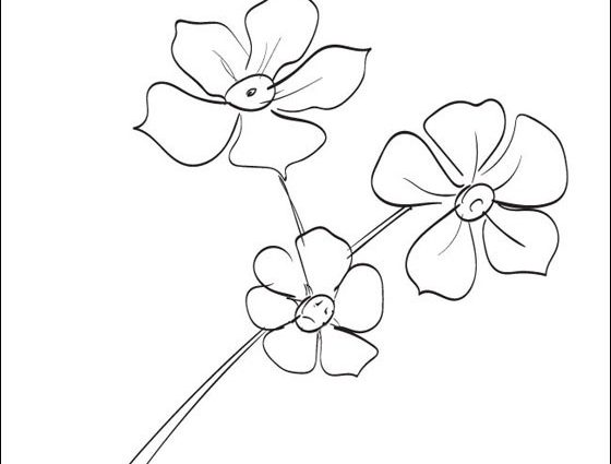 560x425 Forget Me Not Flower Coloring Page Forget Me Nots Coloring Page