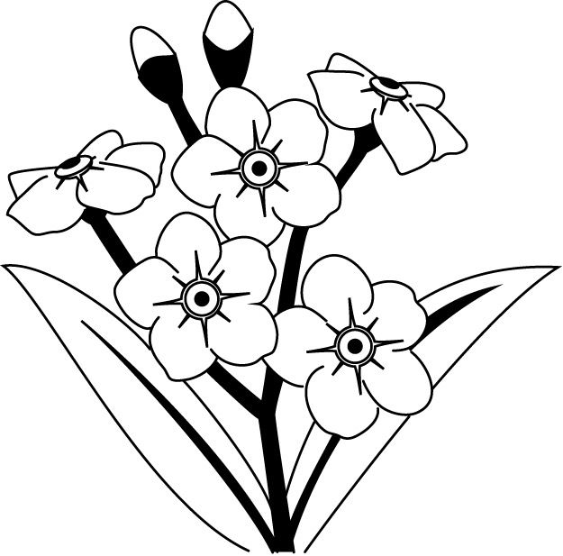 625x617 Coloring Pages Forget Me Not, Printable For Kids Adults, Free