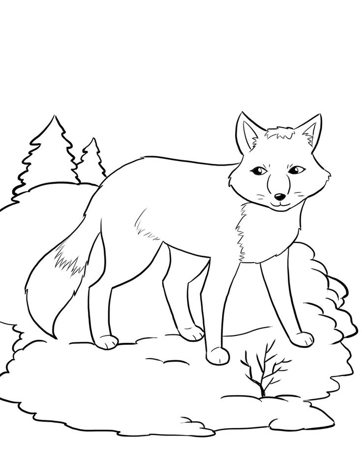 736x952 Fox Coloring Pages Arctic Fox Coloring Page