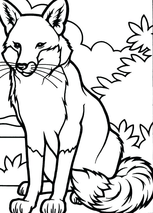 531x739 Fox Coloring Pages Red Fox Coloring Pages Fox Coloring Pages Image