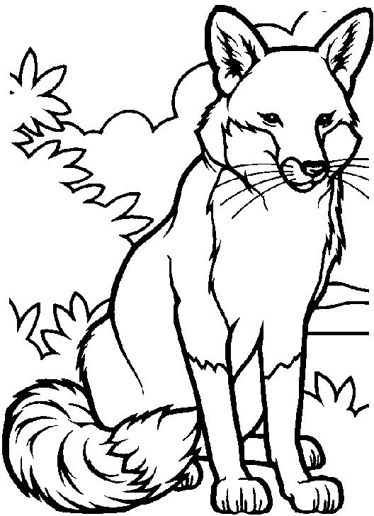 528x728 Aggressive Male Fox Coloring Pages Coloring Pages