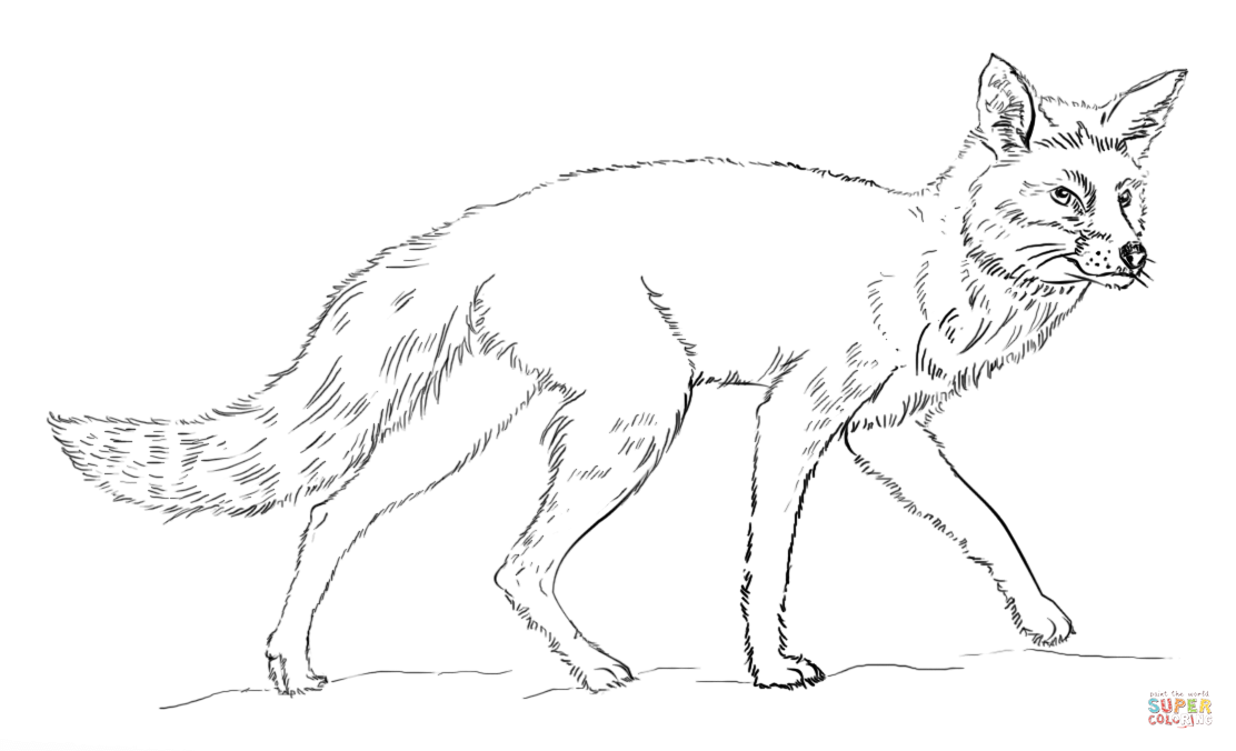 1112x676 Realistic Red Fox Coloring Page Free Printable Coloring Pages