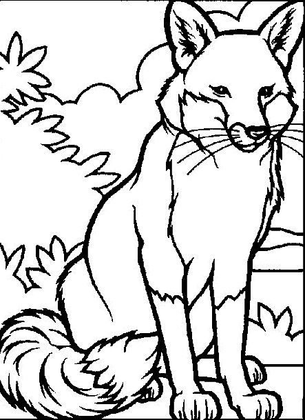 443x609 Fox Coloring Page In Animals Coloring Pages