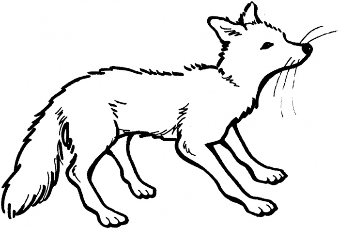 700x472 Fox Coloring Pages
