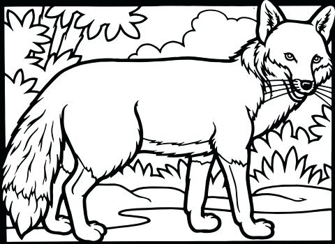 480x350 Fox Coloring Pages Cute Fox Coloring Pages Fox Coloring Pages