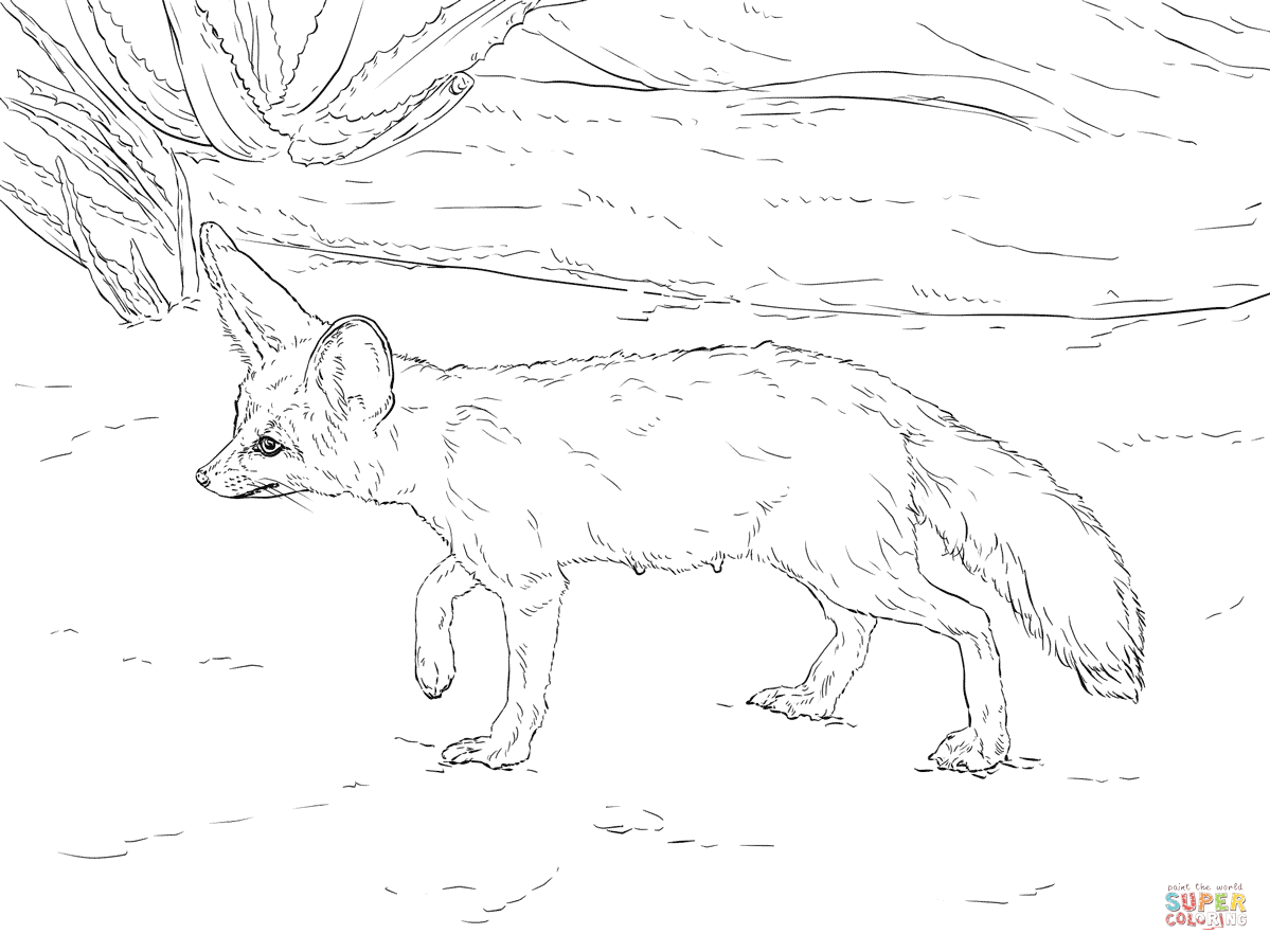 1199x899 Amazing Fennec Fox Coloring Page Curious Free