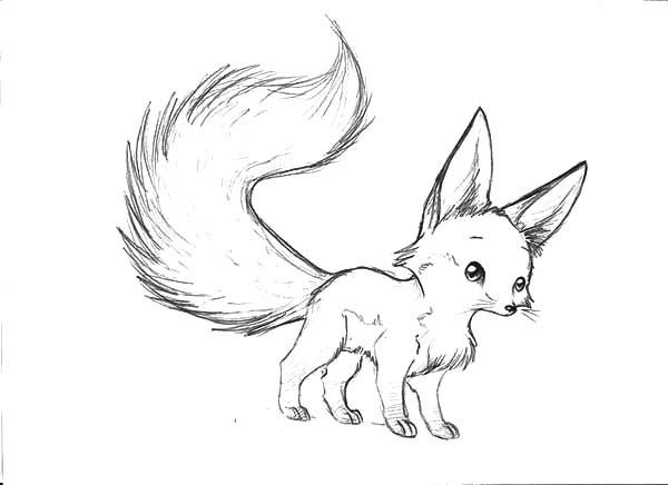 600x436 Long Tailed Desert Fox Coloring Pages Netart Throughout Baby