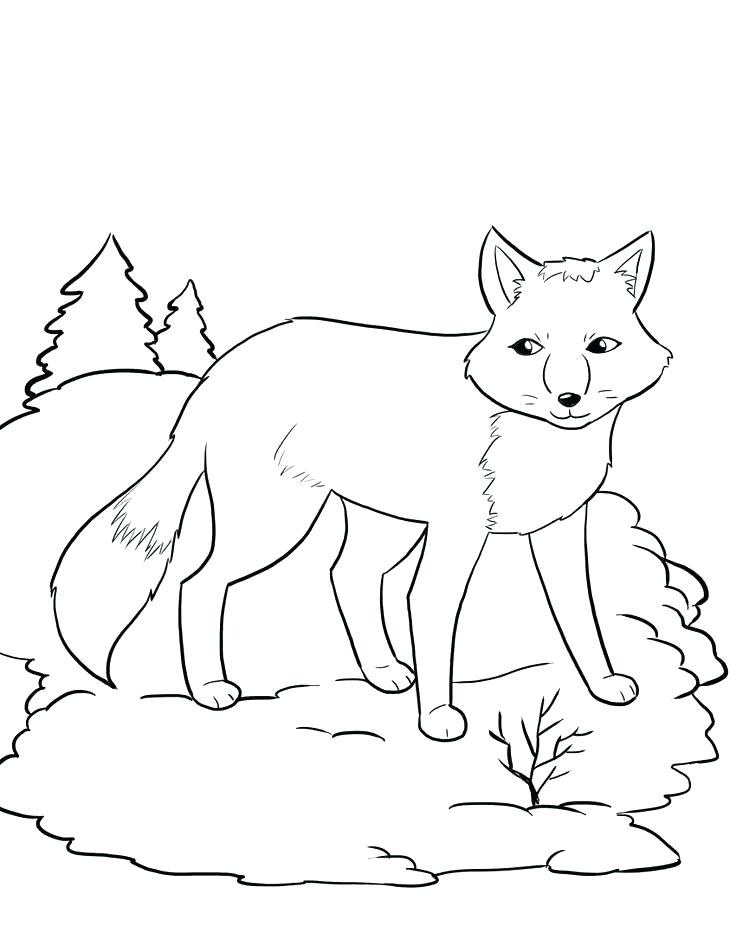 736x952 Arctic Fox Coloring Pages Fox And The Hound Coloring Pages Red Fox