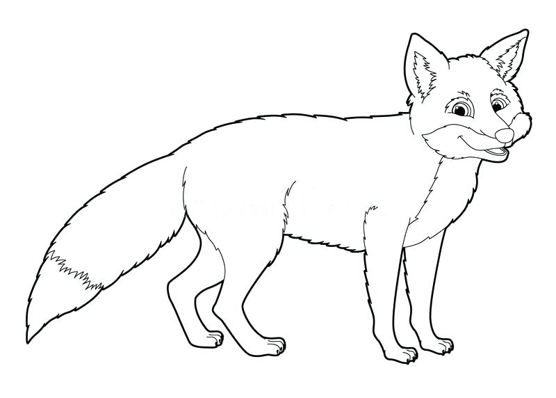 800x572 Fox Coloring Pages Cartoon Animal Fox Coloring Page Royalty Free