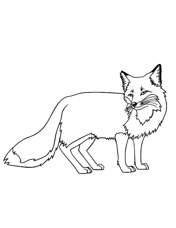 600x776 Kit Fox Coloring Pages