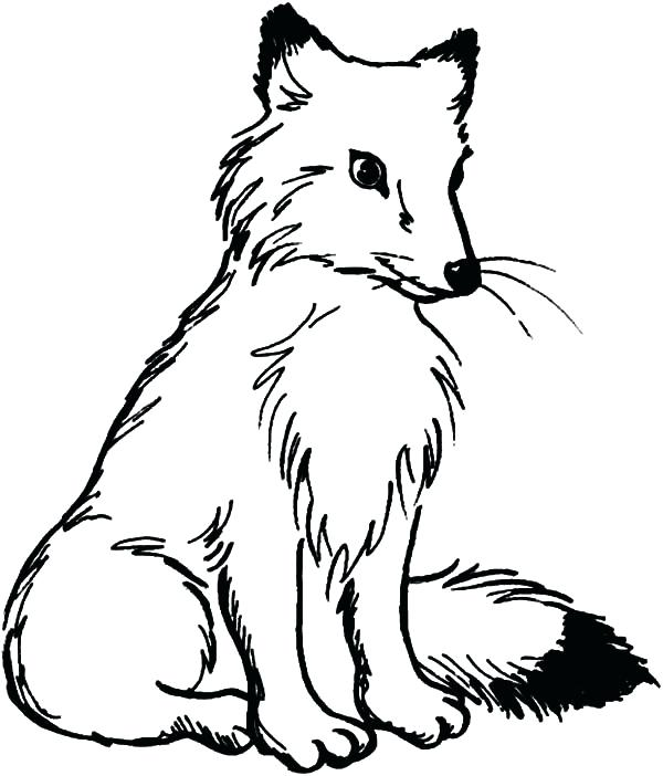 600x702 Fox Coloring Pages Baby Fox Coloring Pages Image Of Baby Fox