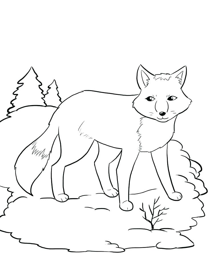 736x952 Fox Coloring Pages Long Tailed Desert Fox Coloring Pages Free