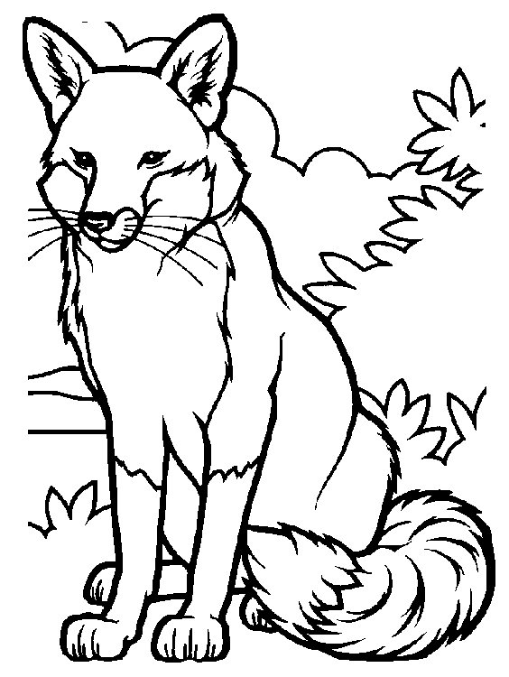 564x750 Fox Colouring Page Classic Fox Coloring Page Color Book Free