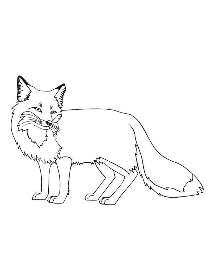 800x1035 Free Printable Fox Coloring Pages For Kids Foxes, Coloring Books