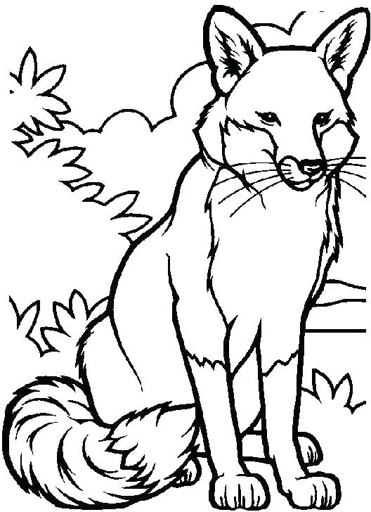 528x728 Fox Coloring Pages Fox Coloring Pages Poodle Coloring Page Fox