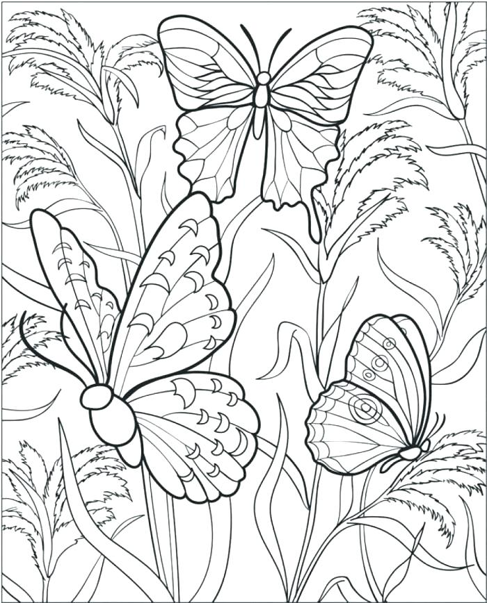 700x868 Butterfly Coloring Pages Adults Butterfly Coloring Pages