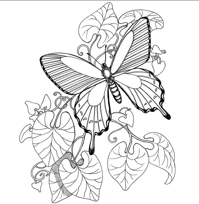 690x708 Cute Butterfly Coloring Pages