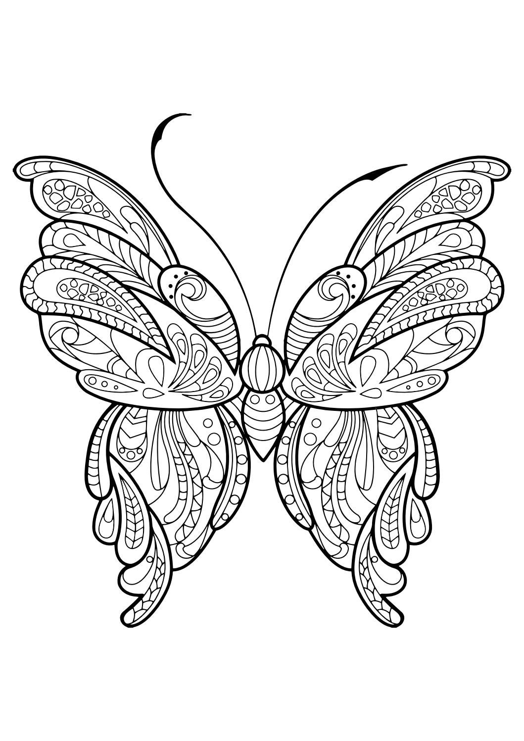 1059x1497 New Easy Butterfly Adult Coloring Pages Design Printable