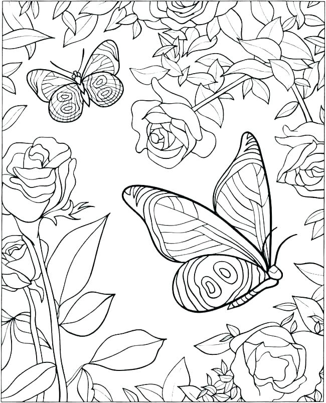 650x804 Coloring Pages Of Butterfly