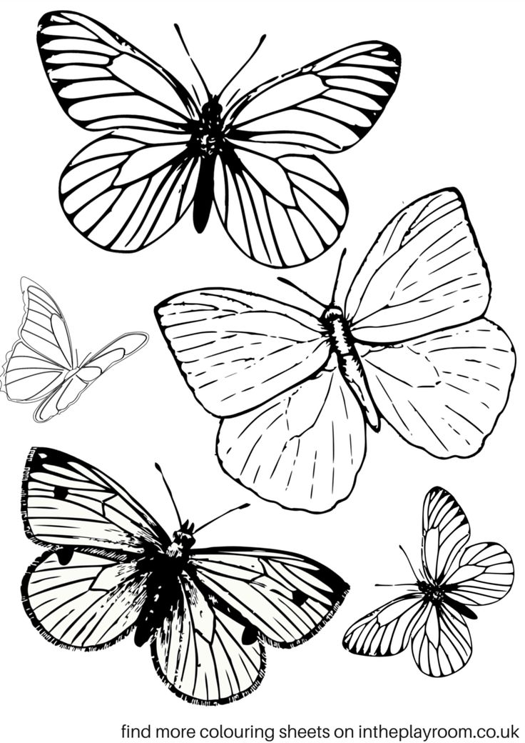 736x1040 Free Printable Coloring Sheets For Adults Butterfly Free Printable