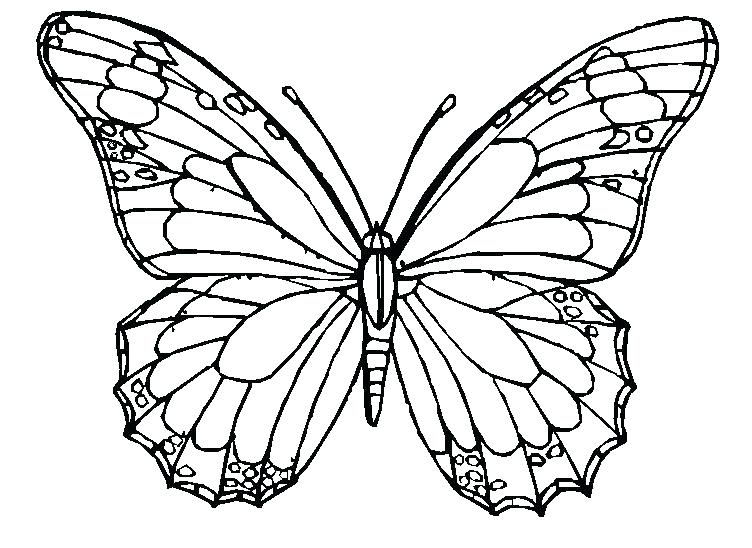 752x548 Butterflies Coloring Pages Butterfly Coloring Pages For Adults