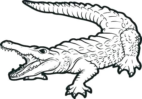 Free Alligator Coloring Pages at GetDrawings.com | Free for ...