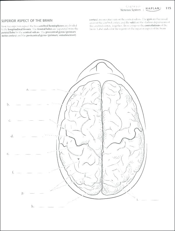 600x791 Brain Anatomy Coloring Pages Anatomy Coloring Book Free Also Brain