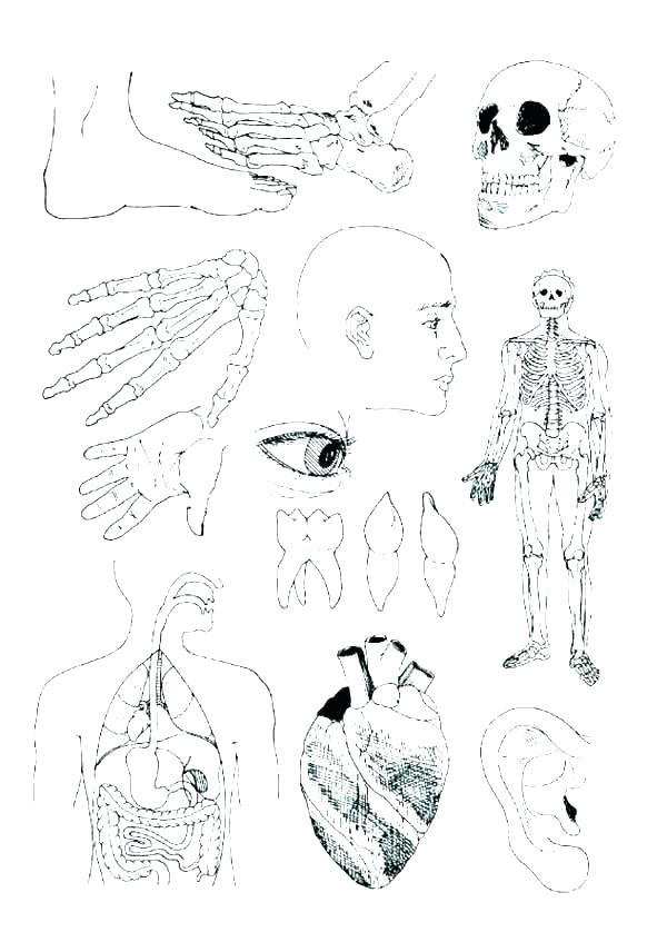 600x847 Human Anatomy Coloring Pages Free Anatomy Coloring Pages Image