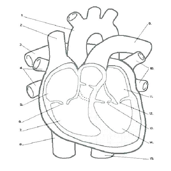 600x600 Anatomy And Physiology Coloring Pages Free Physiology Coloring