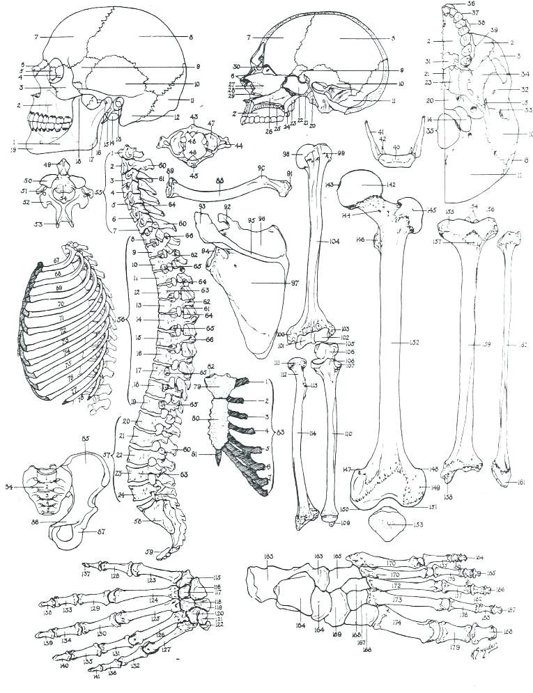 765x995 Anatomy Coloring Book Free