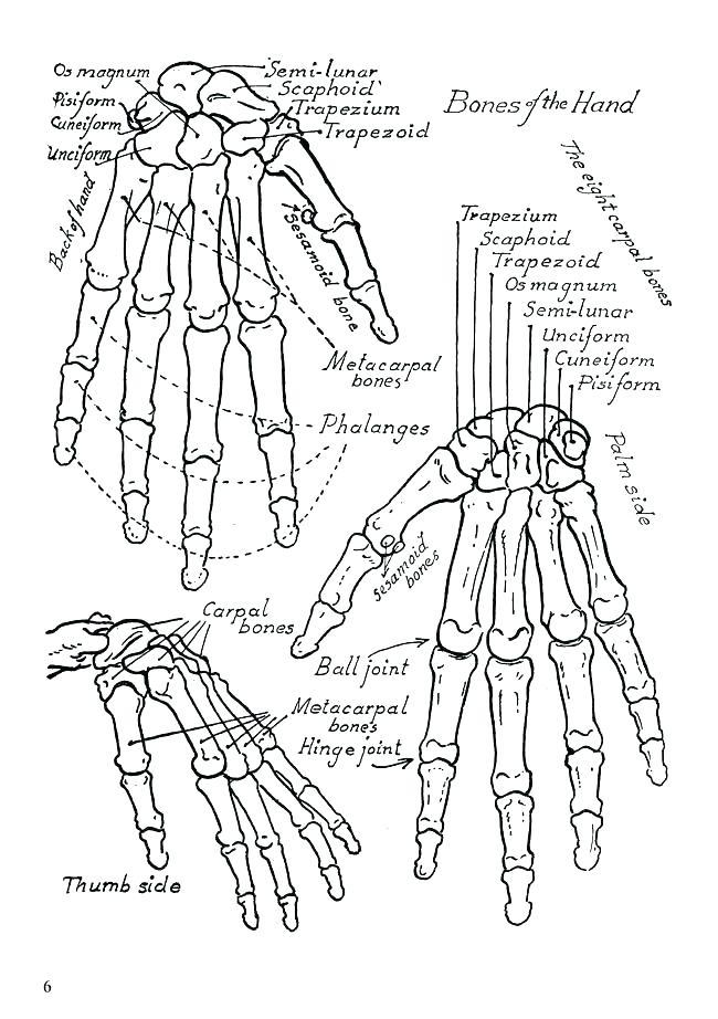 650x922 Anatomy Coloring Book Free With Free Printable Human Anatomy
