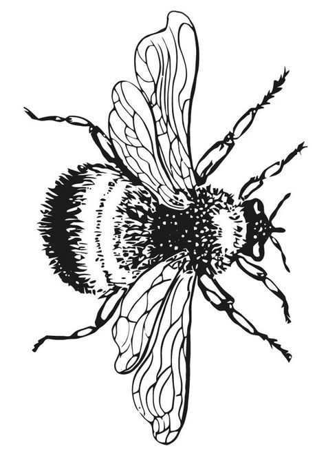 Free Bee Coloring Pages