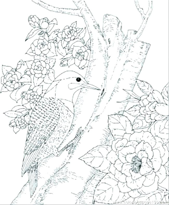 650x789 Bird Coloring Pages Birds To Color Cute Bird Coloring Pages